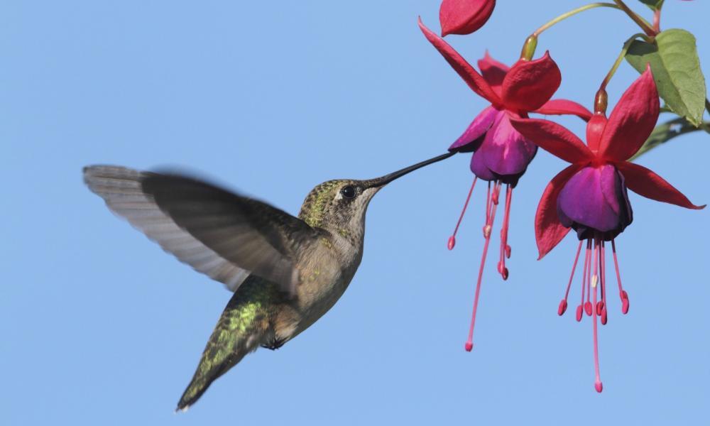 A madarak repülése