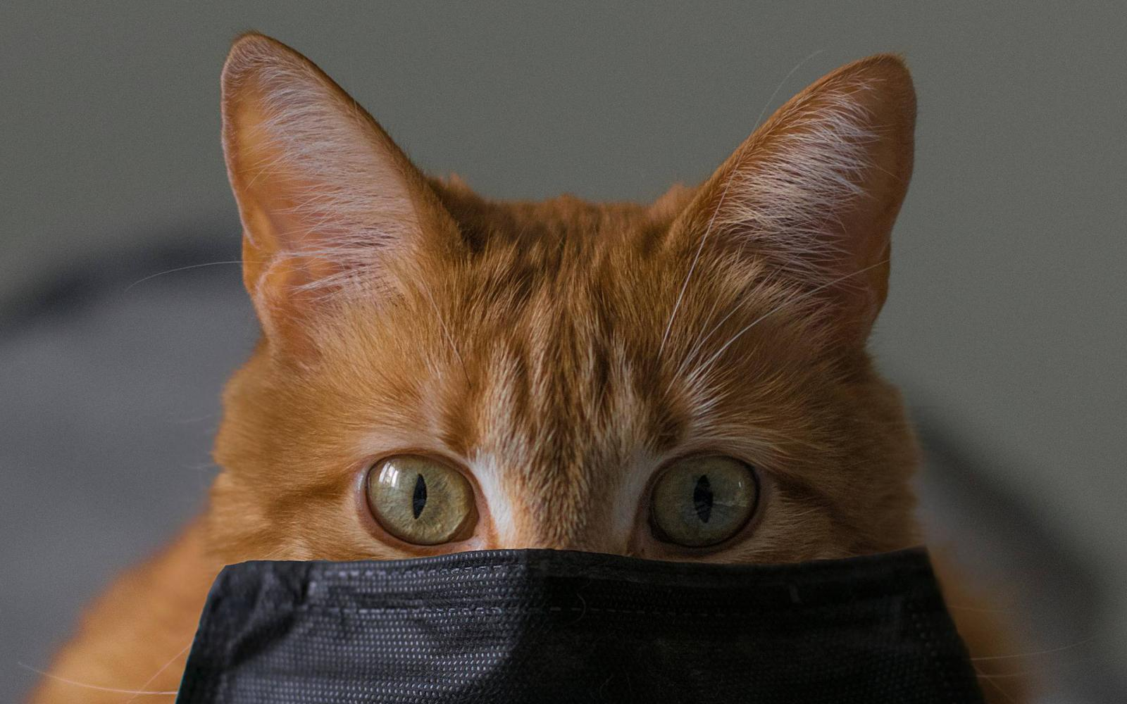 macska pénzt keres video demo számla opción