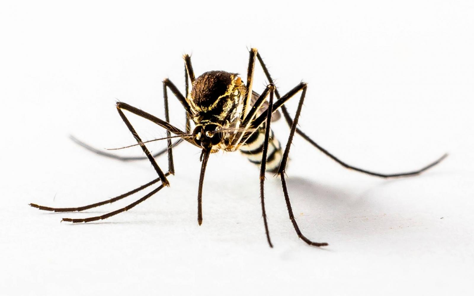 A leghíresebb parazita, Kórokozók jelenléte a szervezetben