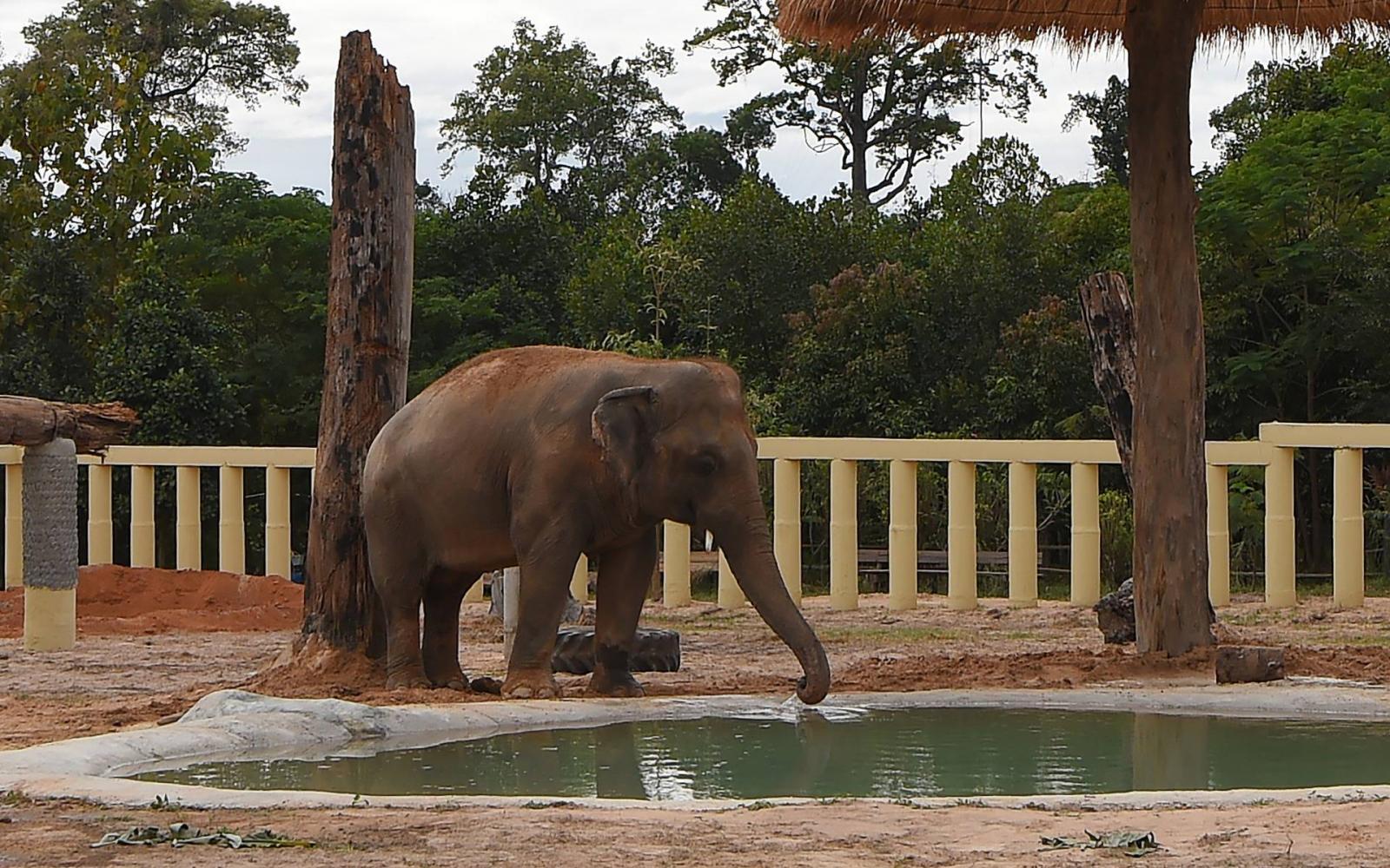 Miért rossz az elefántok látása, Látás 80 százaléka mennyi