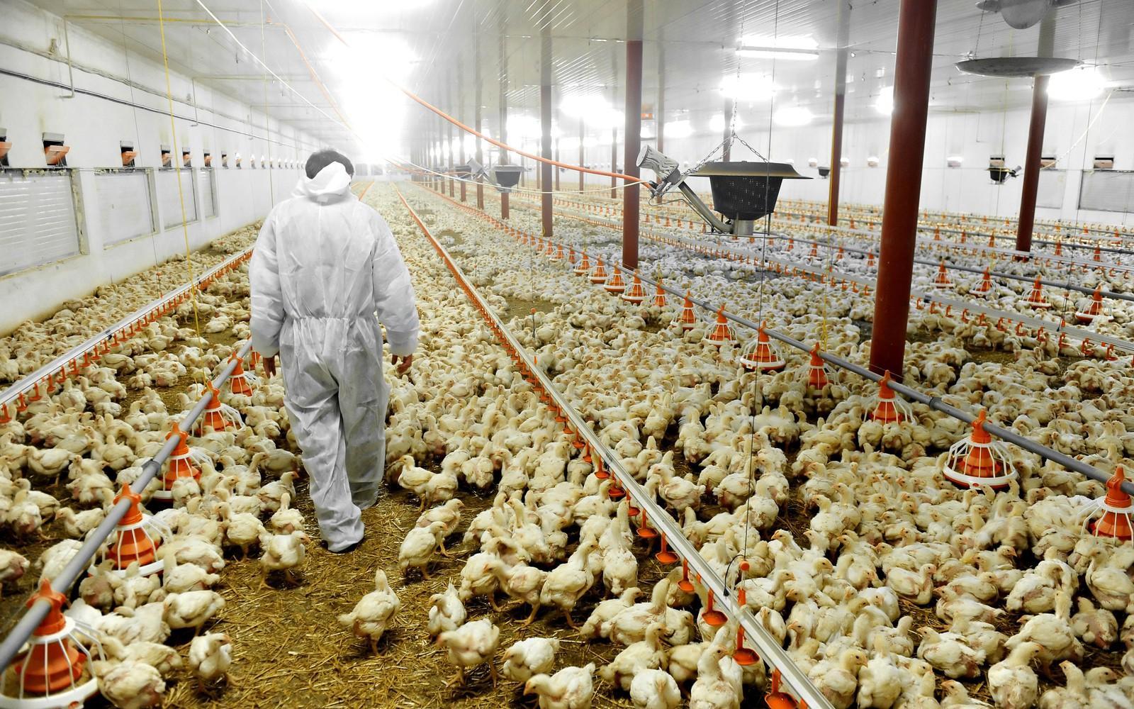 madárinfluenza fertőzési útvonalai
