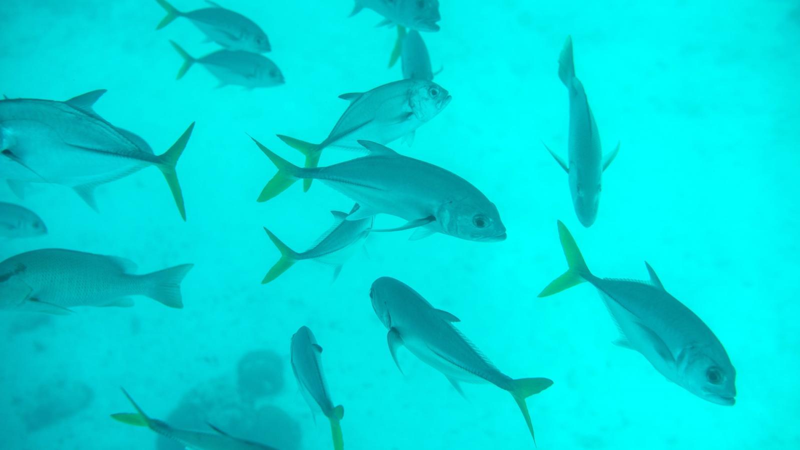 Még sok más hal a tengerben, ingyenes